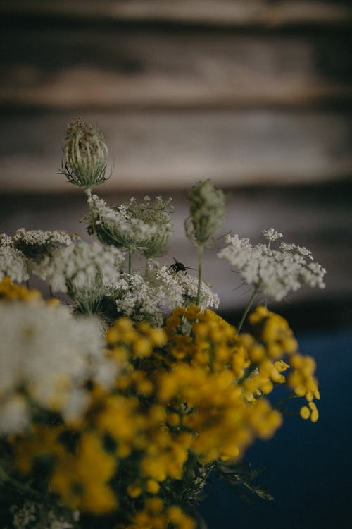 Безкоштовне стокове фото на тему «бур'ян, Денне світло, дерево»