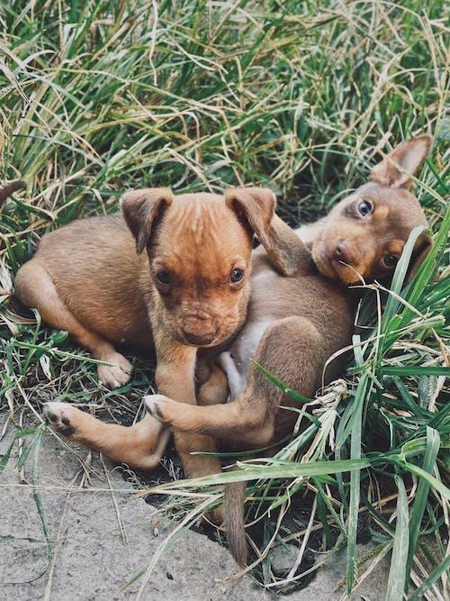 Free stock photo of animal, baby, canine