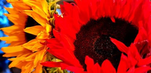 Immagine gratuita di colori, fiori, fiori bellissimi