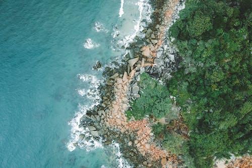 Ảnh lưu trữ miễn phí về bề mặt trái đất, biển, cây