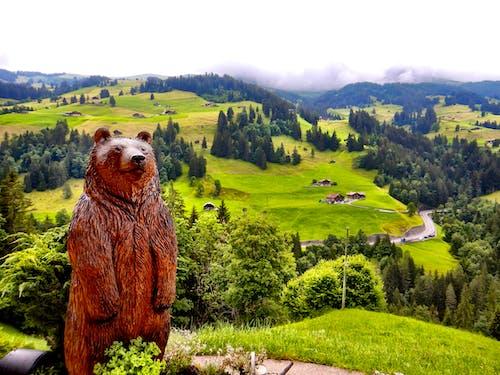 Free stock photo of alpine, alps, bear