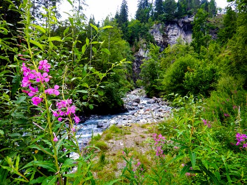 Free stock photo of adventure, beautiful flower, beautiful flowers