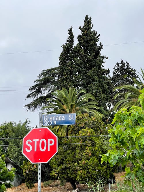Red signboard with inscription Stop placed on road against green trees under cloudy sky in daytime