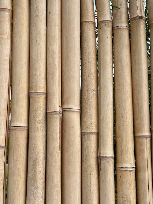 Foto stok gratis alam, bagian, bambu