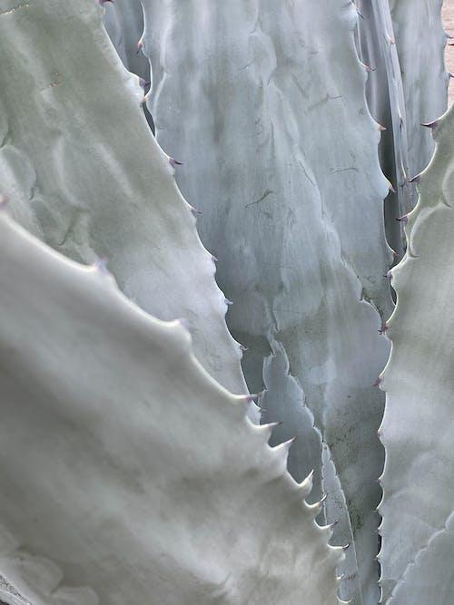 Kostenloses Stock Foto zu blumen, boden, botanik