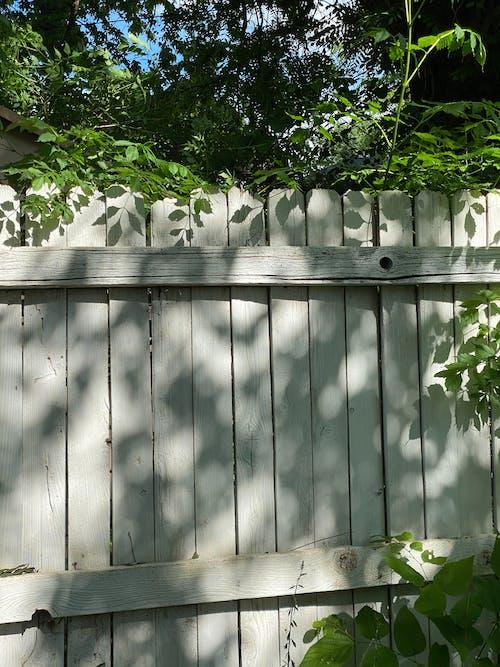 Green Plants Beside White Wooden Fence