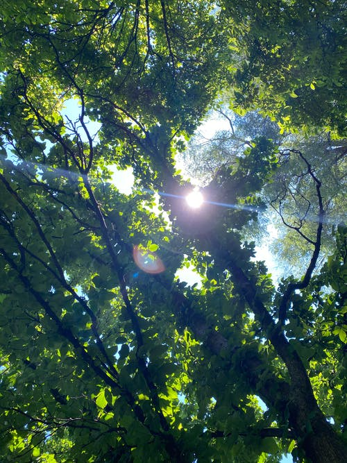 Sun in the Middle of the Forest