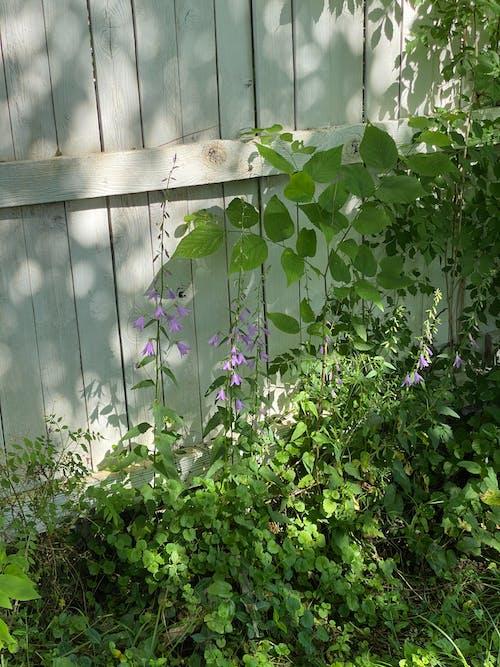 Purple Flower Beside White Wooden Fence