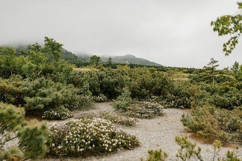 Ilmainen kuvapankkikuva tunnisteilla aurinko, hiekkaranta, kasvikunta