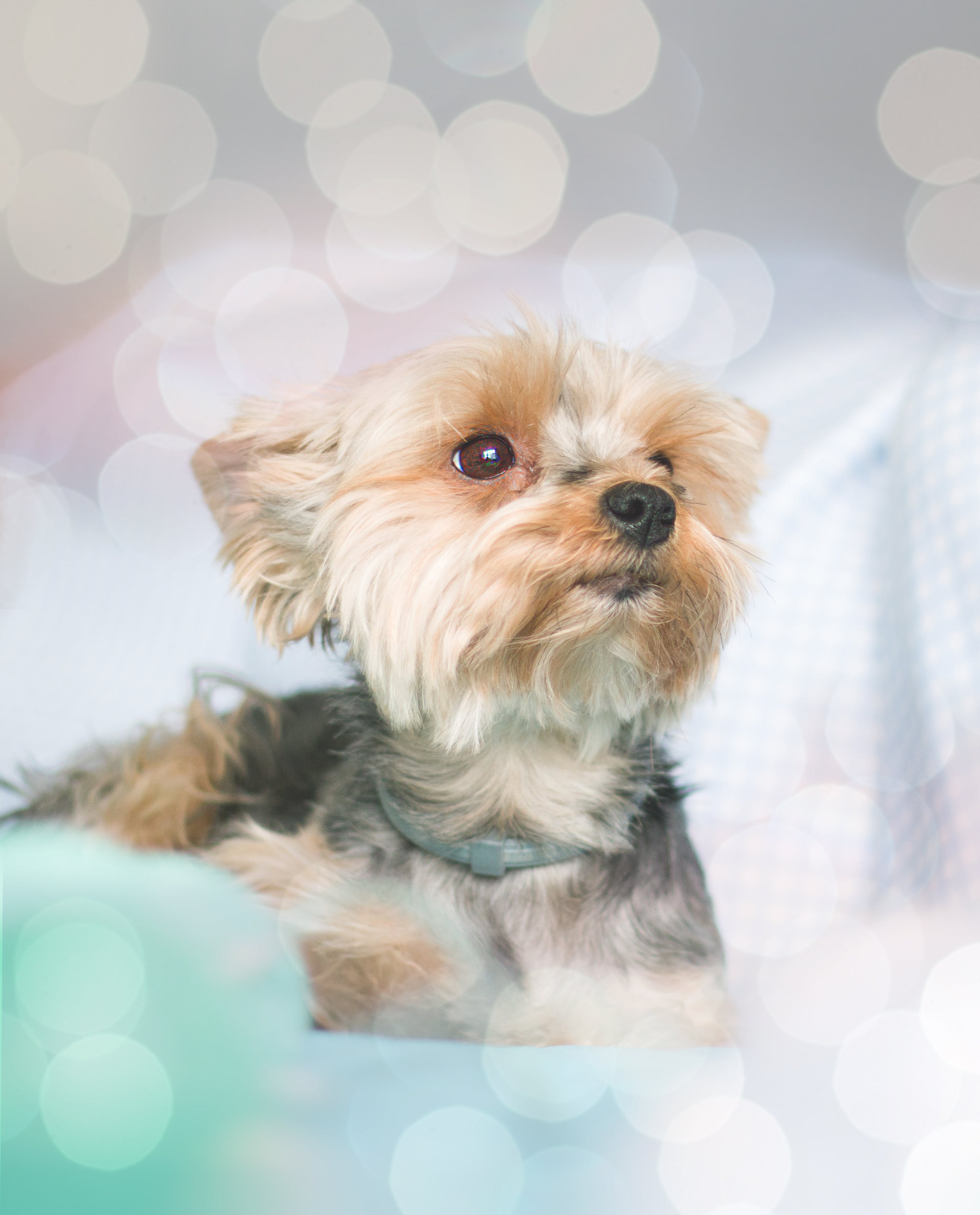 Free stock photo of bokeh, dog, dog in bed, lights