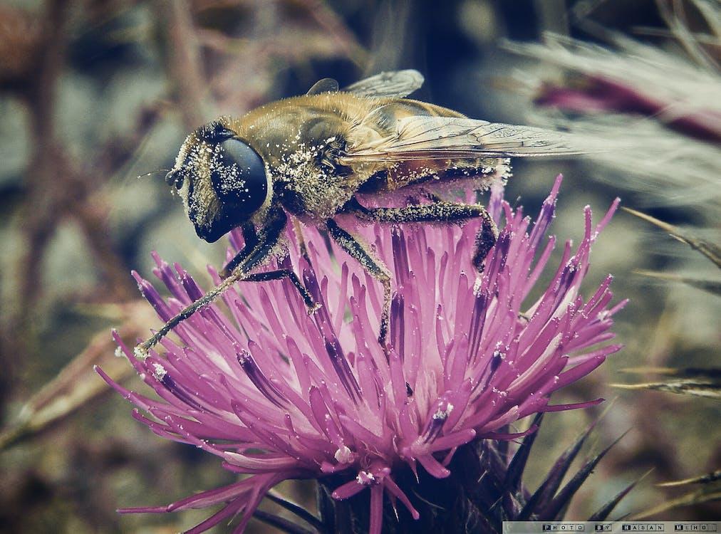 bie, blomst, natur
