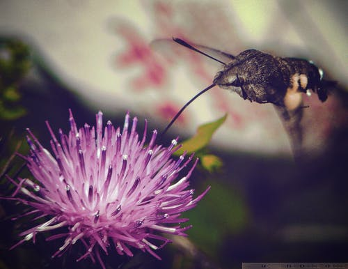 Free stock photo of bee, flower, insect, nature