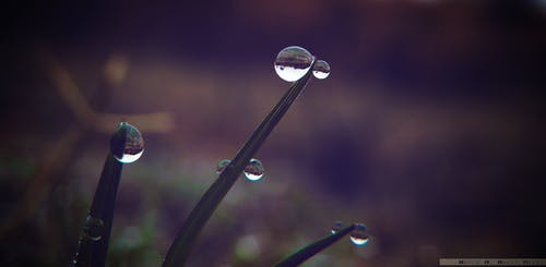 Free stock photo of closeup, dew, grass, reflection