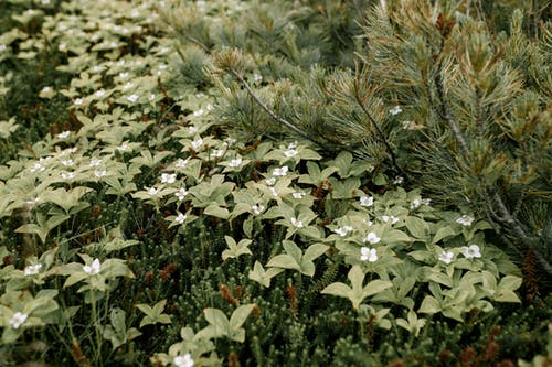Ilmainen kuvapankkikuva tunnisteilla ikivihreä, kasvikunta, kasvu