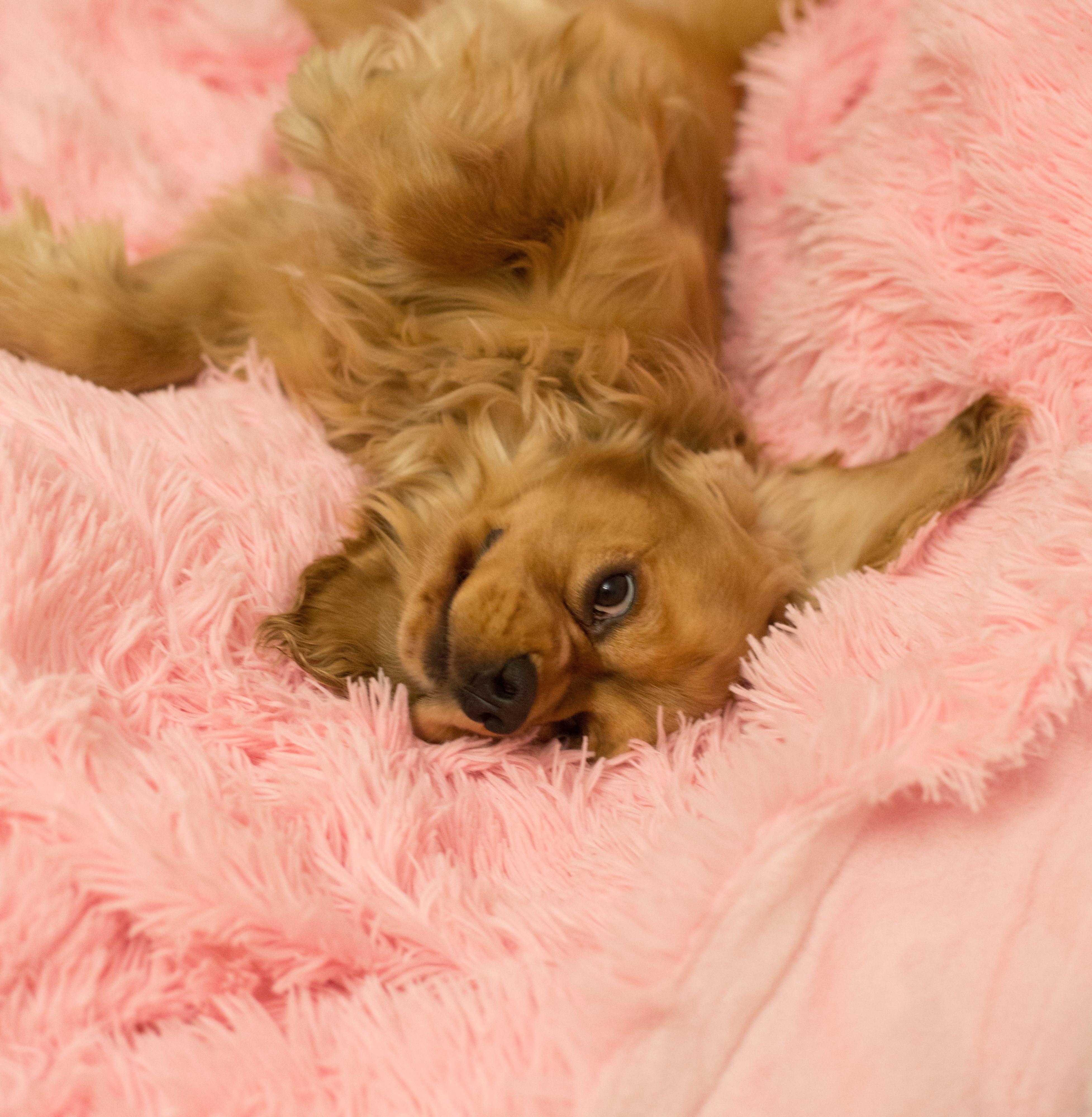 Dog Lying on Fur Cushion