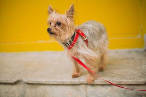 Photos gratuites de adorable, animal, animal de compagnie, canin