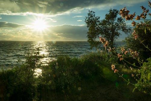 ağaçlar, bulutlar, Çiçekler, çim içeren Ücretsiz stok fotoğraf