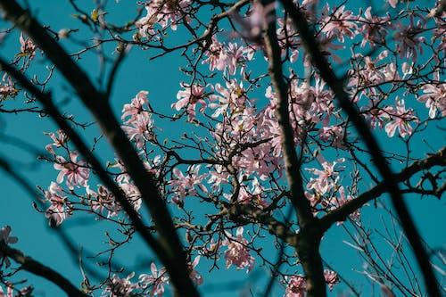 Gratis lagerfoto af blad, blomst, blomstrende