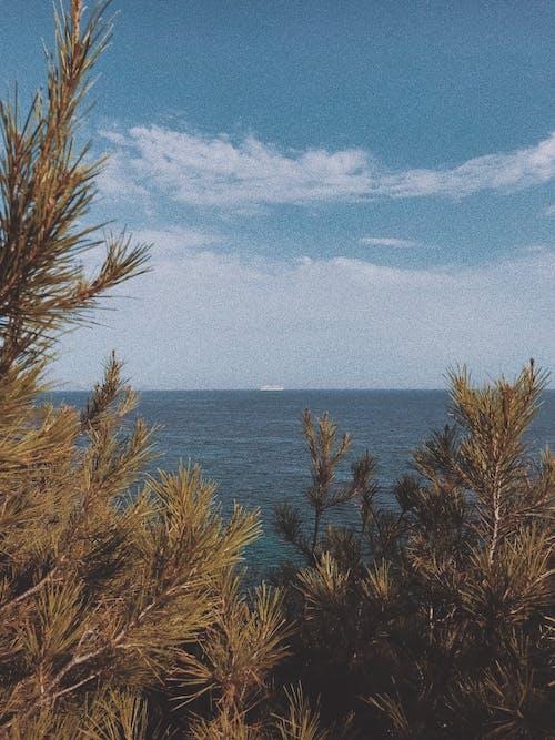 Brown Leafless Tree Near Blue Sea Under Blue Sky