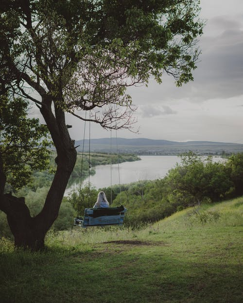 Imagine de stoc gratuită din apă, apus, arbore
