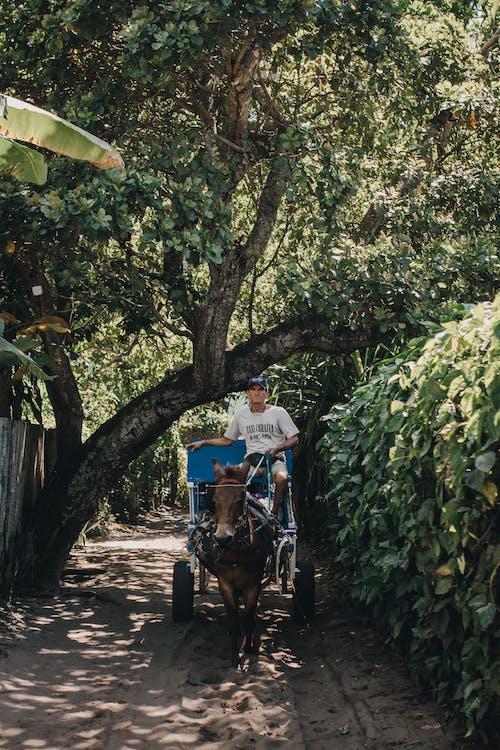 Fotos de stock gratuitas de adulto, agricultura, árbol