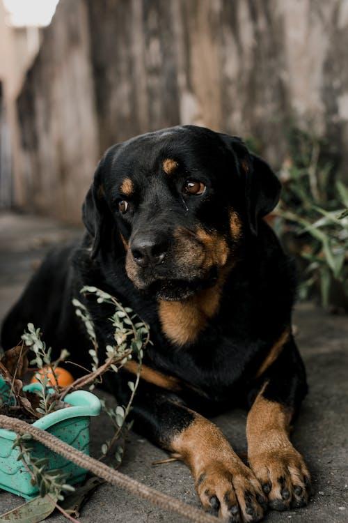 Fotos de stock gratuitas de amistad, animal, canino