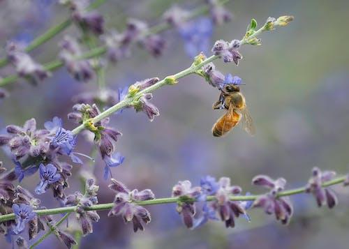 Fotos de stock gratuitas de abeja, artrópodo, crecimiento