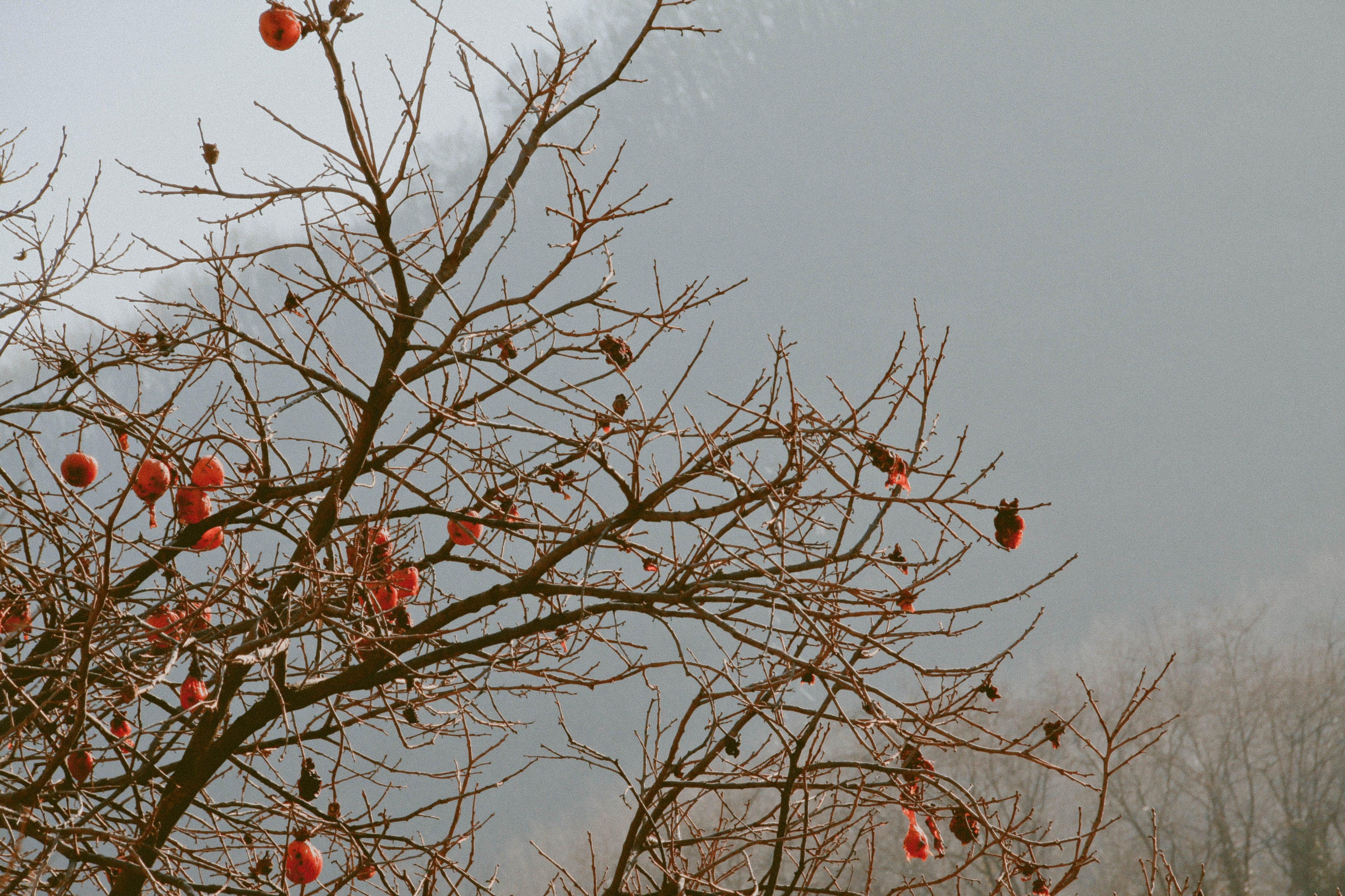Brown Tree With Orange Furin
