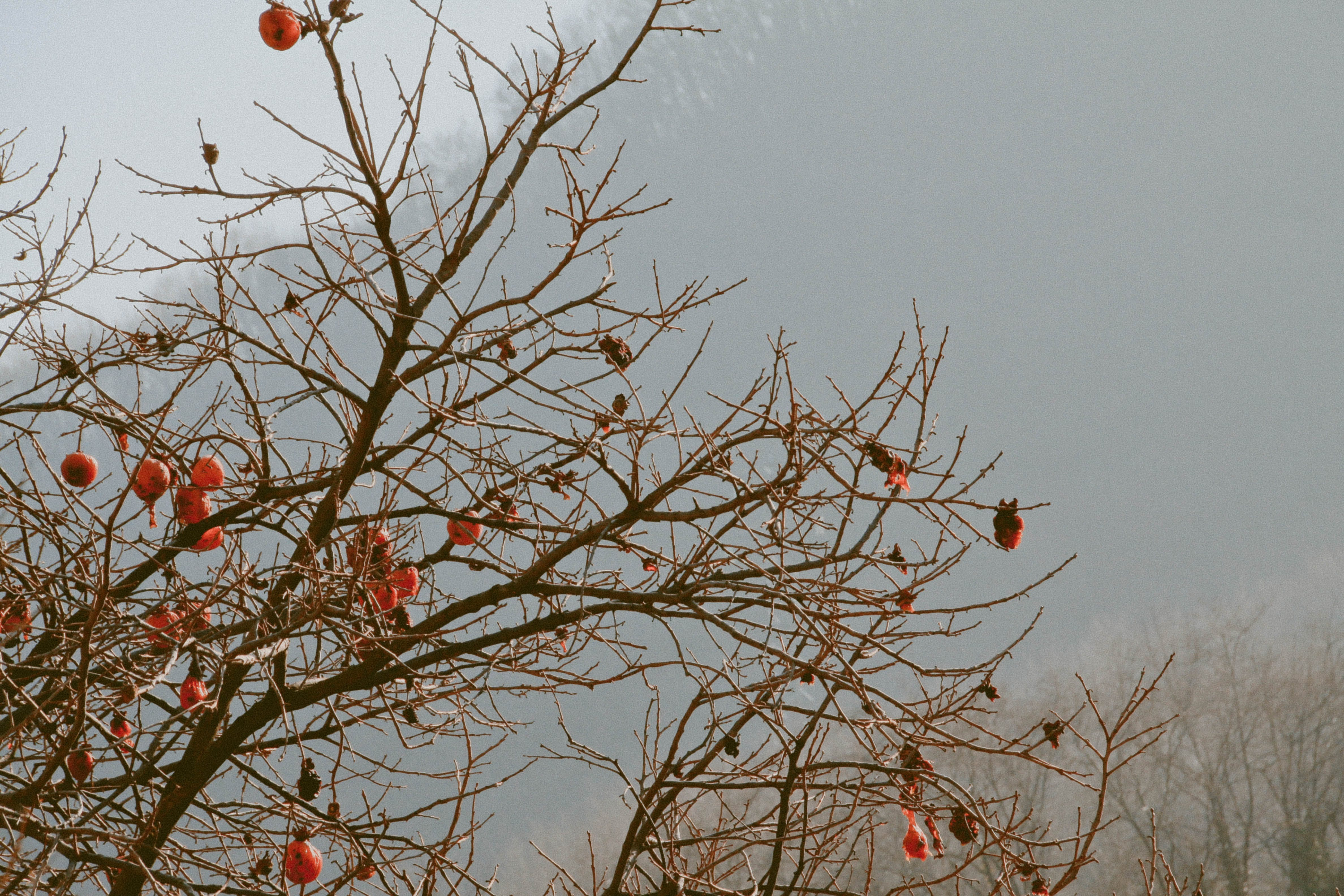 Brown Tree With Orange Furin