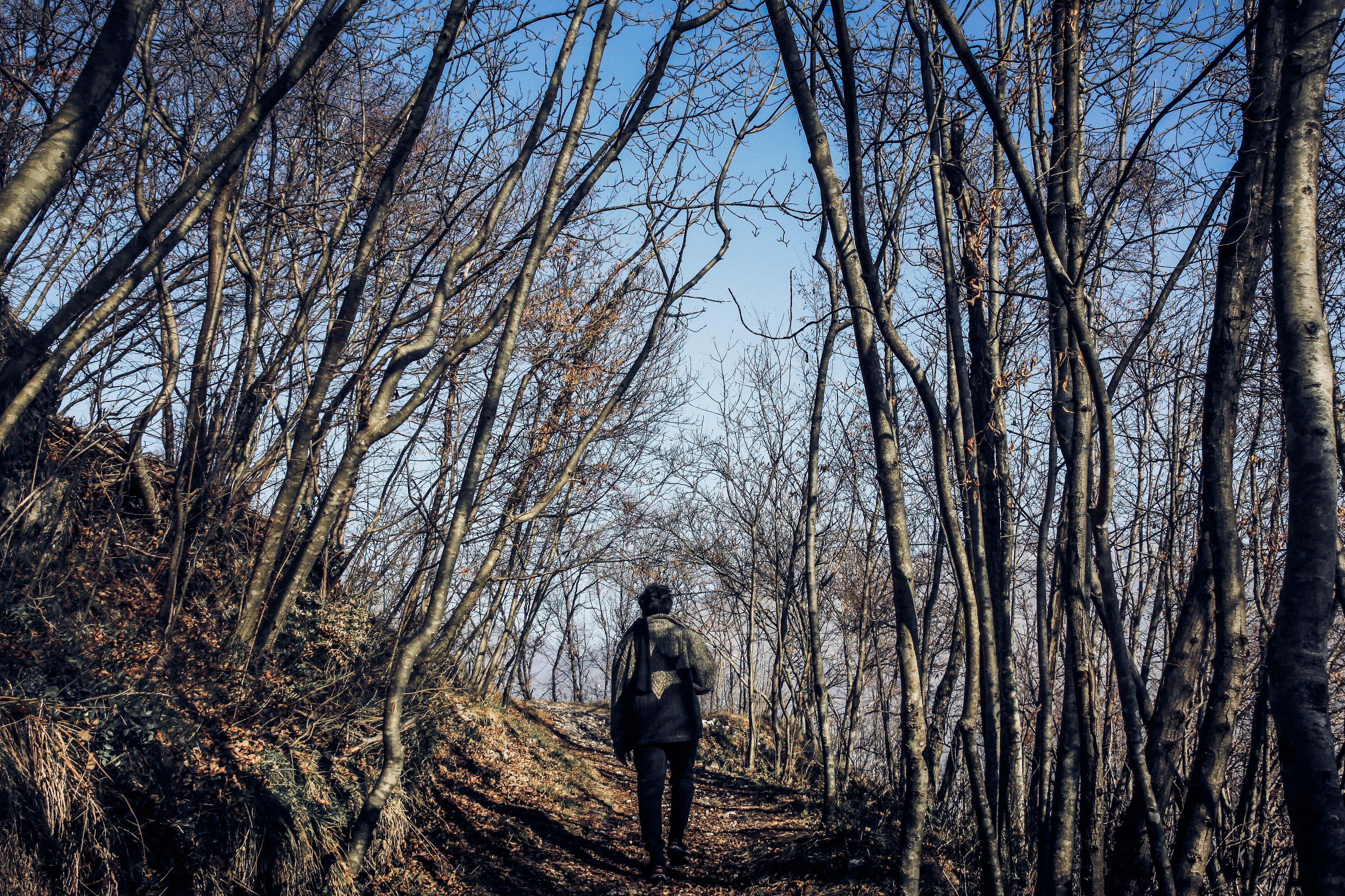 Δωρεάν στοκ φωτογραφιών με άνδρας, δασικός, δέντρα, ημέρα