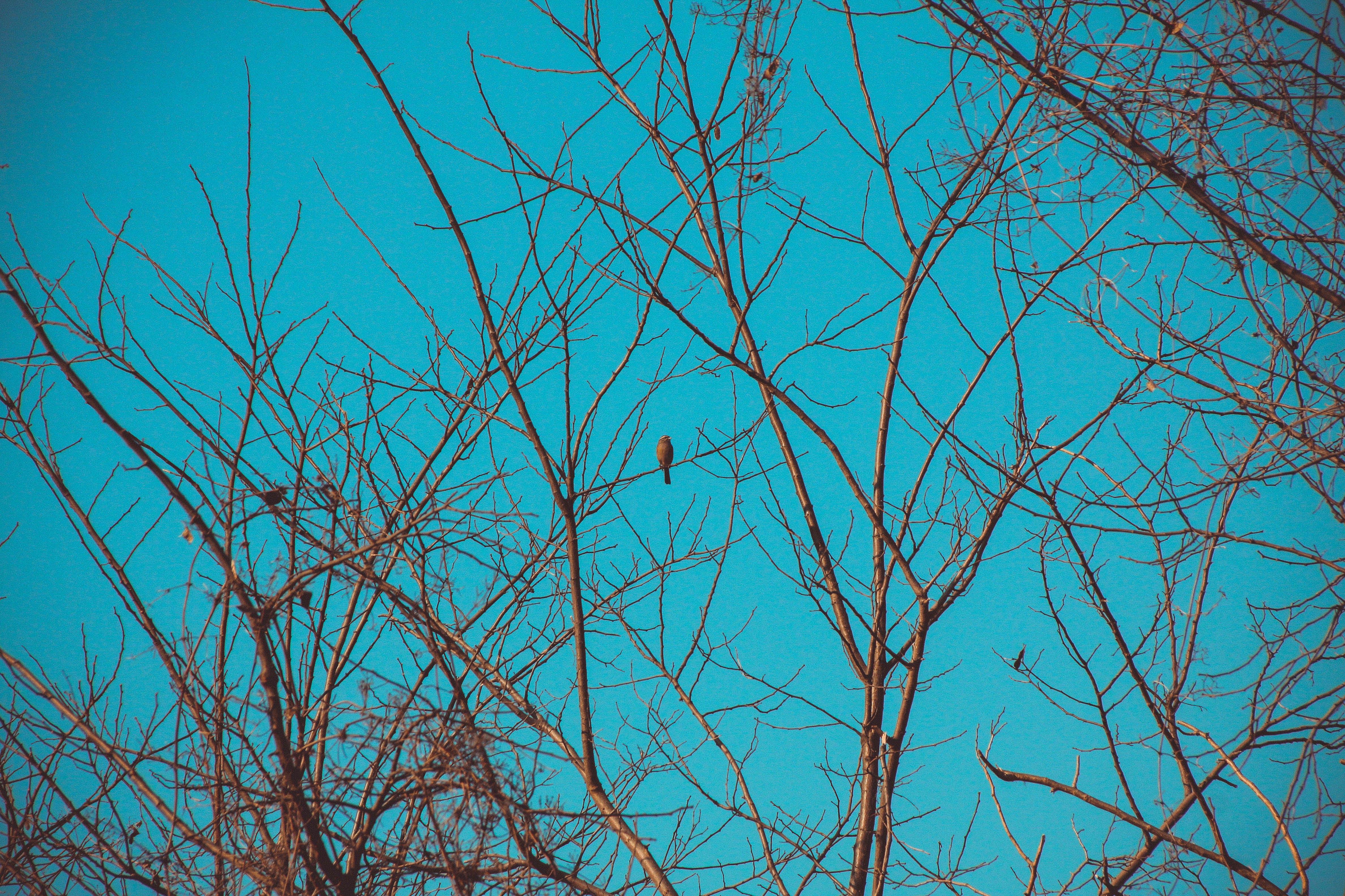 Free stock photo of bird, blue sky, italy, nature
