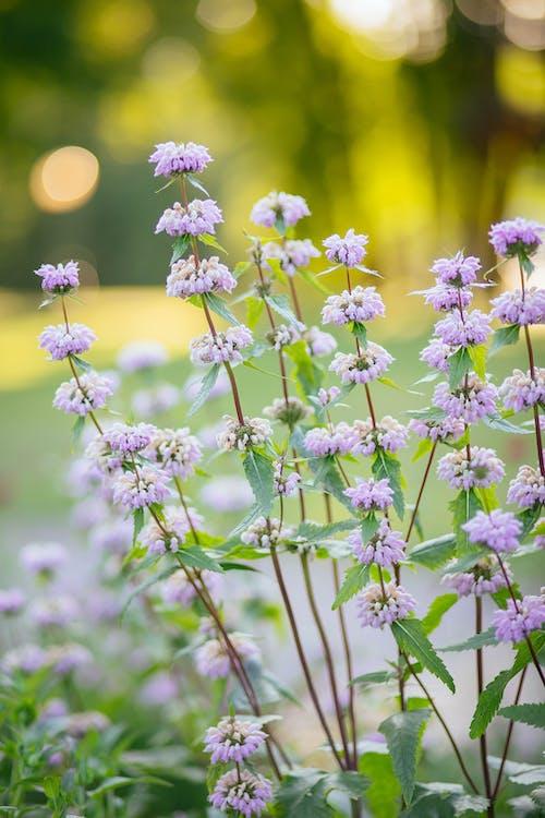 Photos gratuites de à base de plantes, clairière, couleur