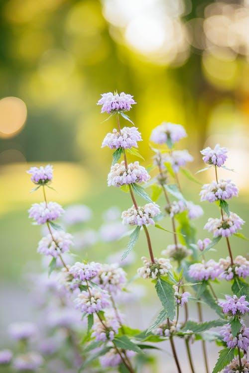 Photos gratuites de à base de plantes, brillant, couleur