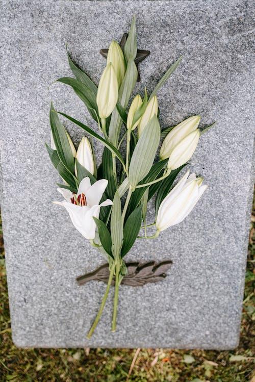 Foto profissional grátis de concreto, flores, mármore