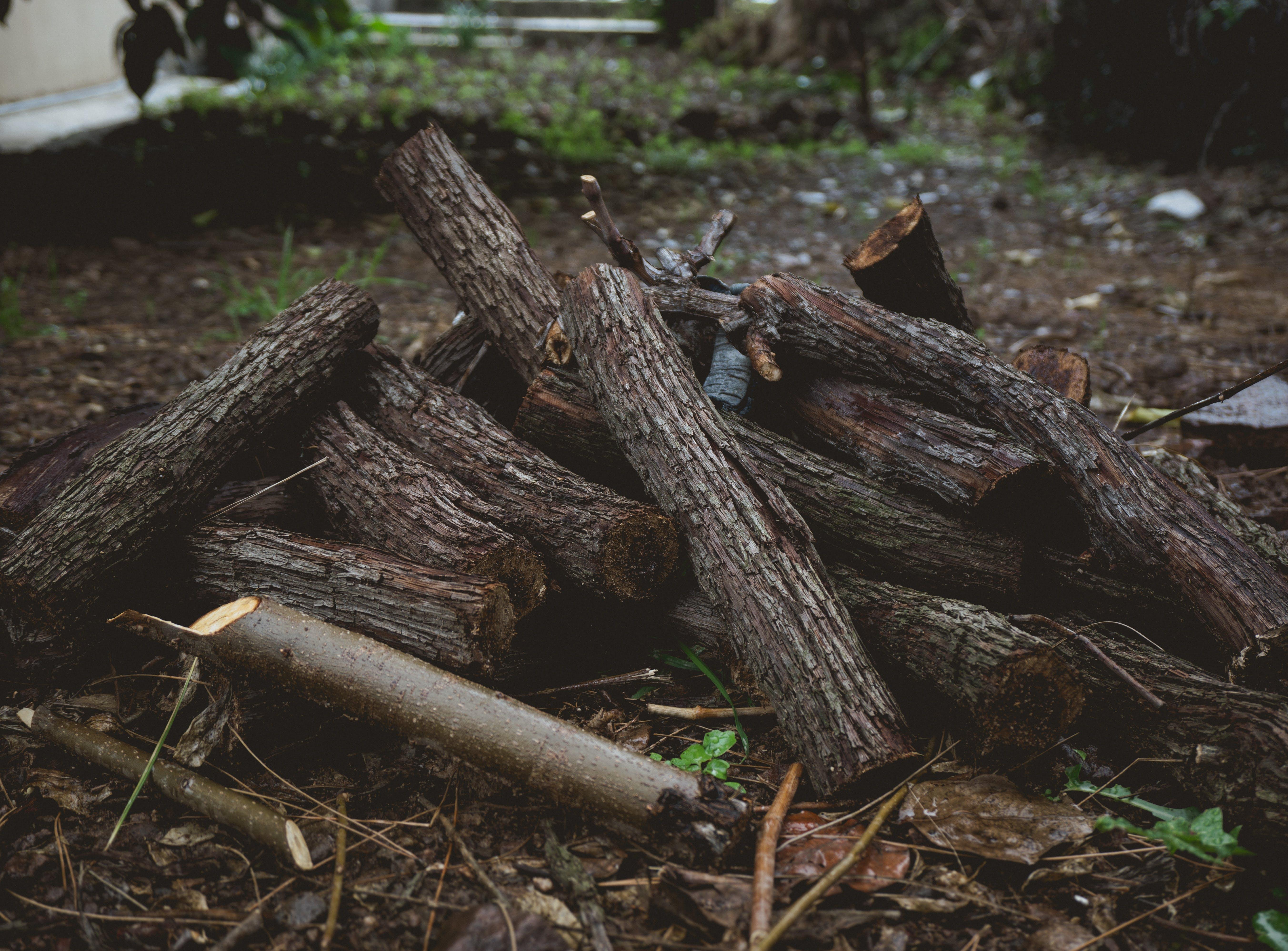 Free stock photo of #outdoorchallenge, autumn, blur, dark