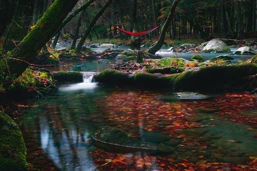 คลังภาพถ่ายฟรี ของ กระแสน้ำ, กลางแจ้ง, การเงียบ