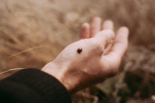 Бесплатное стоковое фото с божья коровка, насекомое, рука