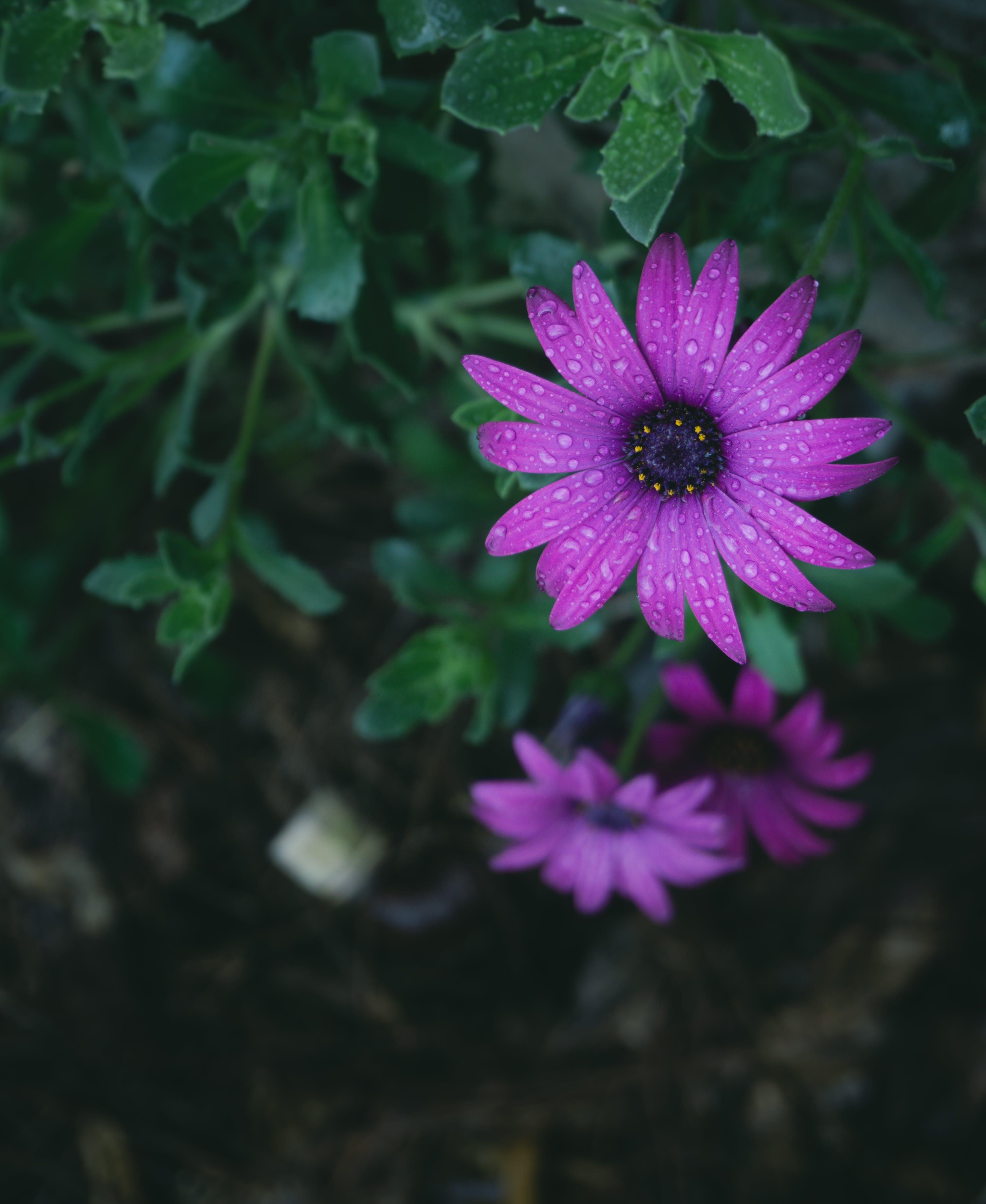 Free stock photo of #outdoorchallenge, blur, flower, garden