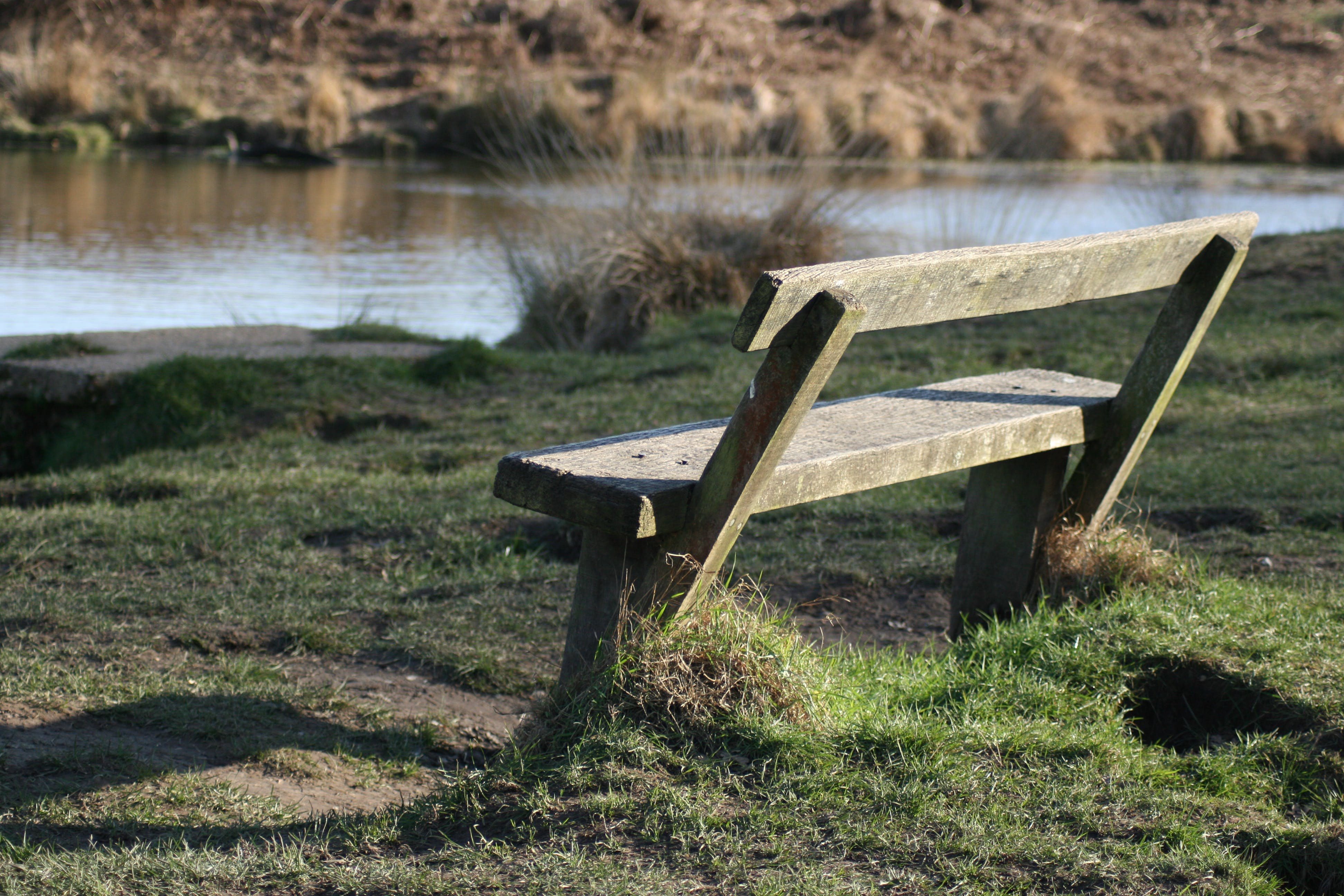 Free stock photo of bench, park bench, pond, quiet