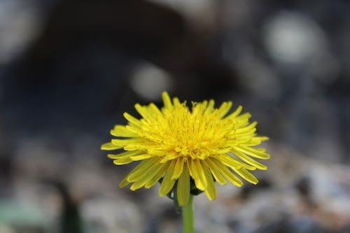 Gratis lagerfoto af blomst, Canon, close-up, gul
