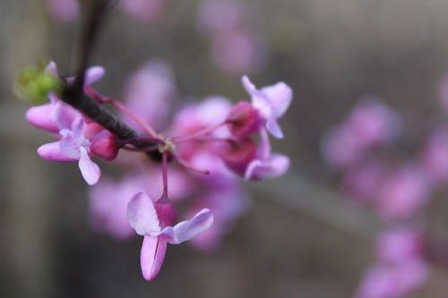Gratis lagerfoto af blomst, Canon, close-up, jsclingman