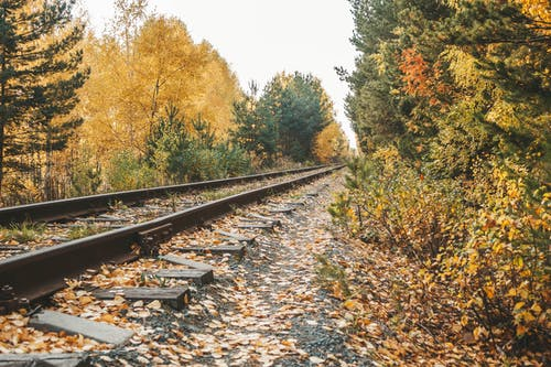 Photo of A Railway Beside Autumn Trees