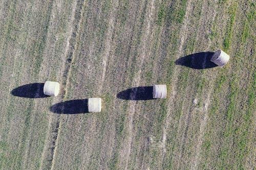 Foto d'estoc gratuïta de a l'aire lliure, arbre, avió