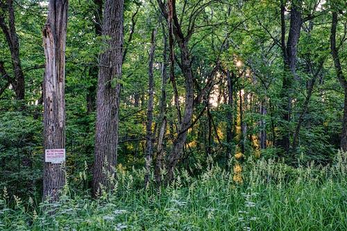 Foto d'estoc gratuïta de a l'aire lliure, alba, arbre