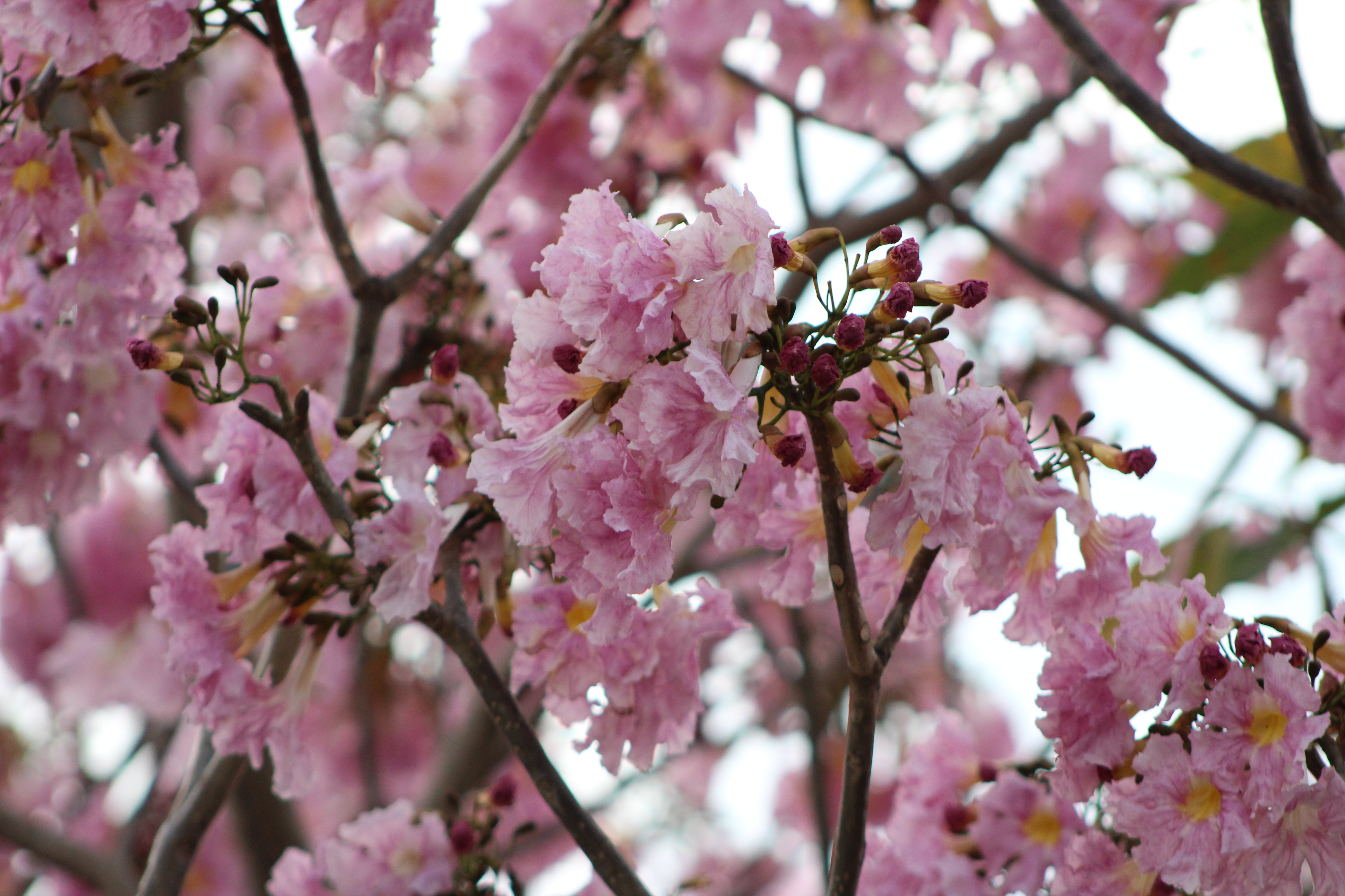 Free stock photo of blossoms, bunches of flowers, flowers
