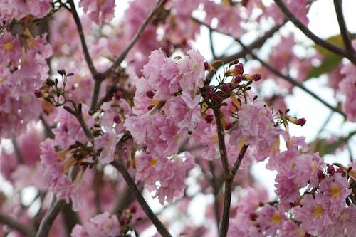 Foto profissional grátis de cachos de flores, flores
