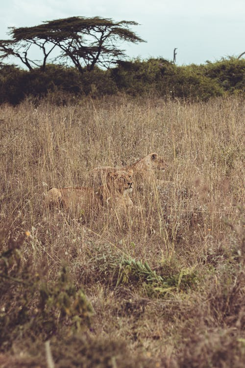 Základová fotografie zdarma na téma Afrika, divočina, fauna