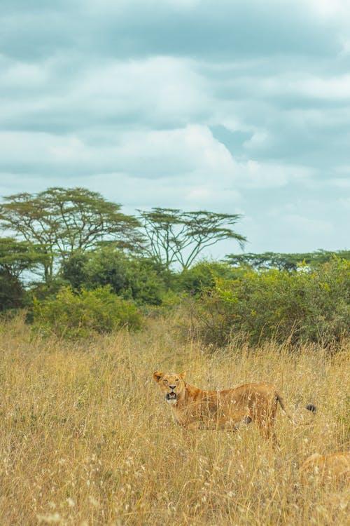 Základová fotografie zdarma na téma Afrika, cestování, divočina