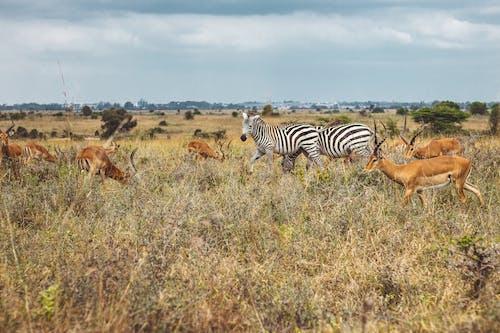 Základová fotografie zdarma na téma Afrika, džungle, Keňa