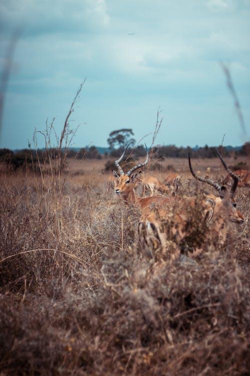 Základová fotografie zdarma na téma Afrika, antilopa, divočina